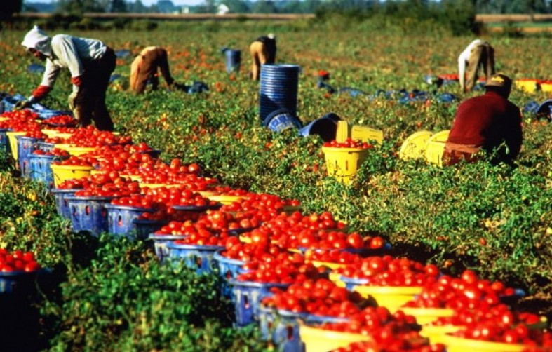 Сбор ягод - одно из самых популярных занятий