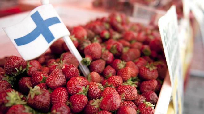 Клубника - самая популярная ягода в Финляндии